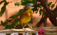 bird_05