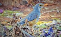 bird_06